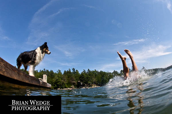 Brian Wedge Dogs Swimming