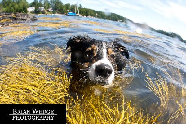 waterdogs7408-0002